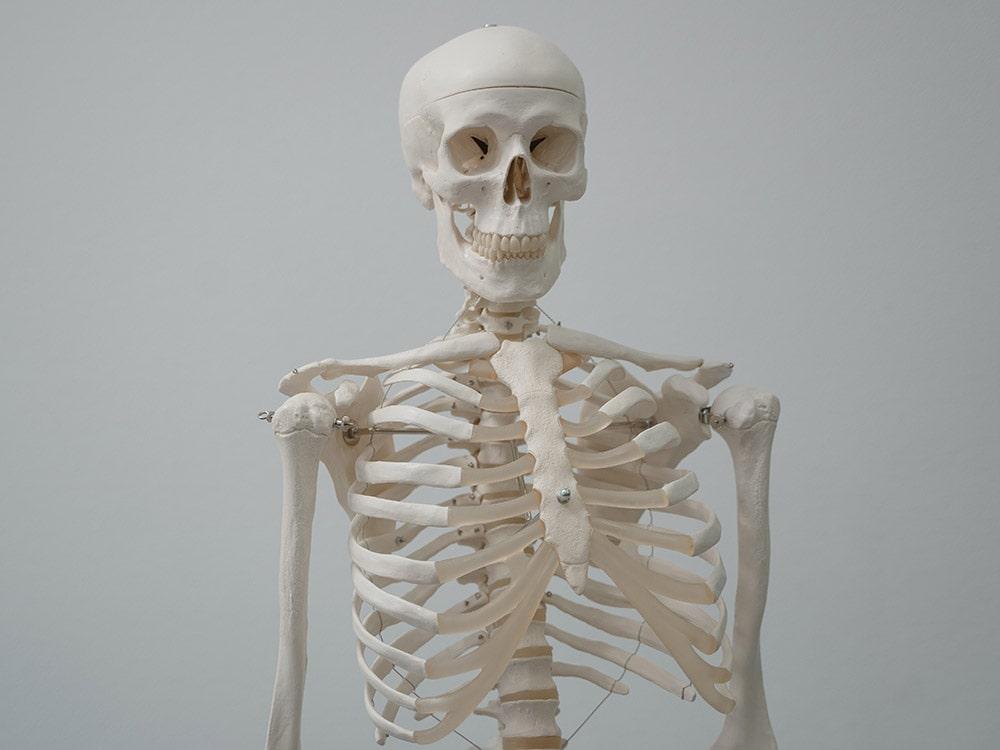 Densytometria: szkielet